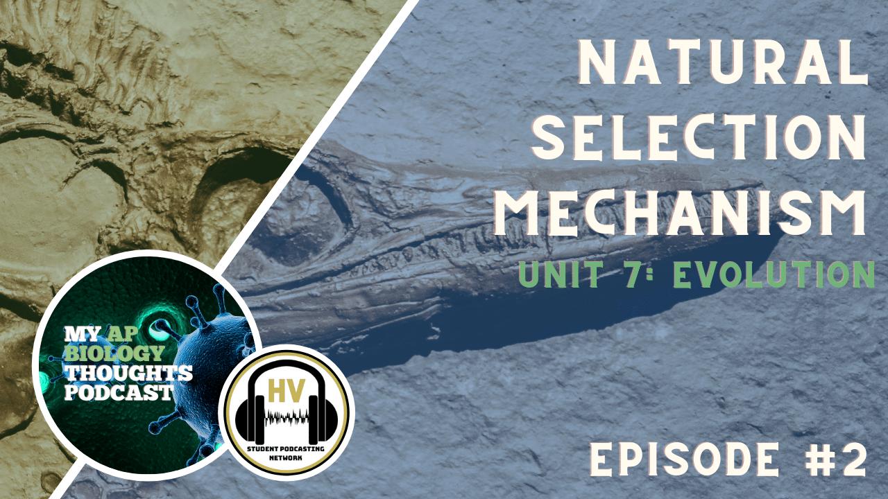 AP Bio Episode 3 Natural Selection Mechanism